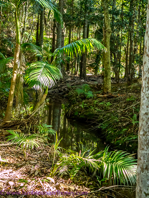 Cape Byron Distillery, brook in the forest
