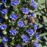 Urban Beekeeping – Lambs' Ears Gets Her Own Honey!