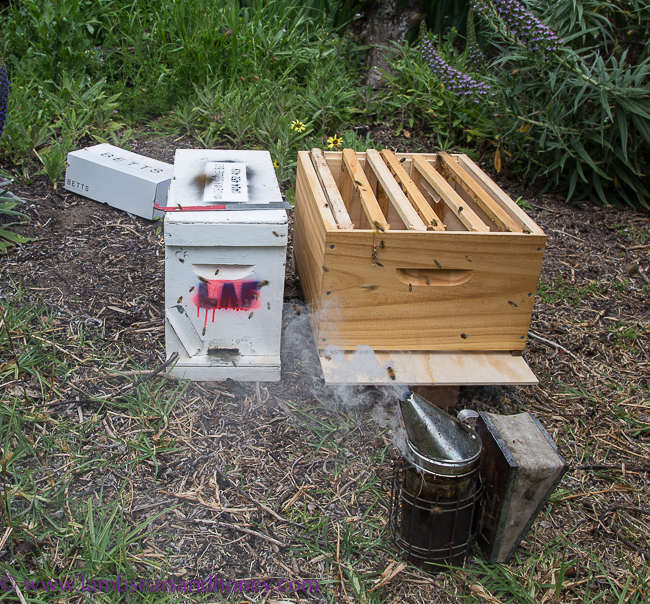New Hive for my bees, Urban Beekeeping