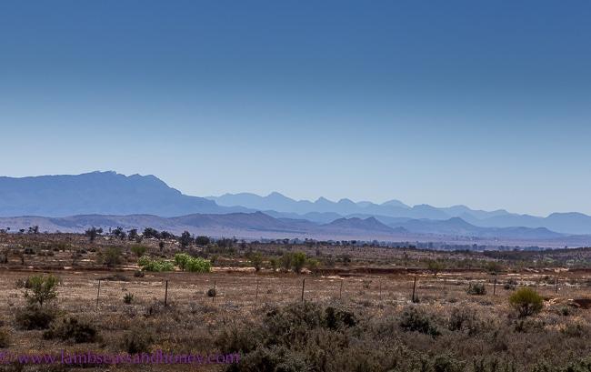 Ancient hills, Flinders Ranges