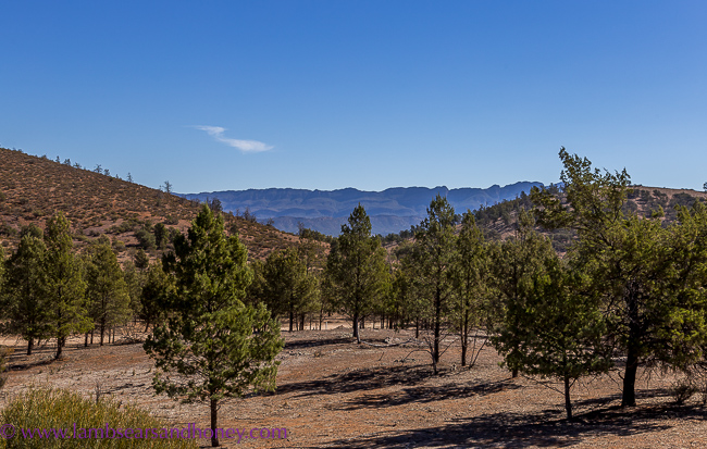 Rawnsley Park Station, Flinders Ranges - view from our eco-villa