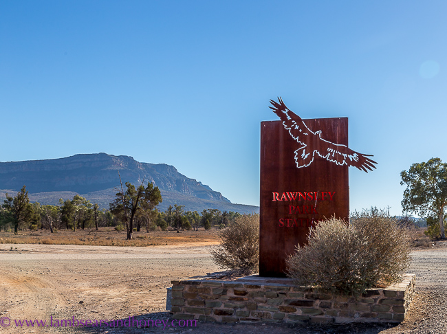 flinders ranges, ranwsley park station