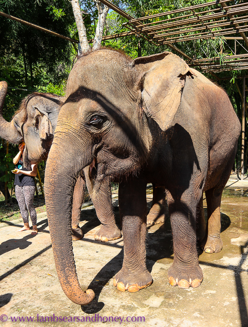 meeting the girls at Elephant Mud Fun, Bali Zoo