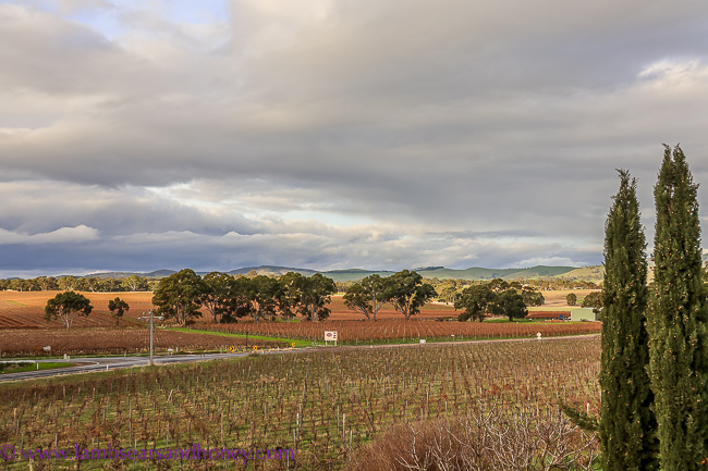 Bedroom view, Barossa Shiraz Estate