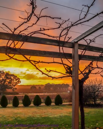 Stunning dawn at Barossa Shiraz Estate