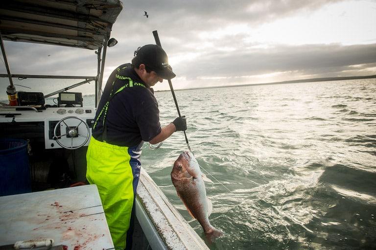 Snapper fisherman, Snapper Fishing
