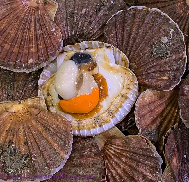 visit rungis, shellfish