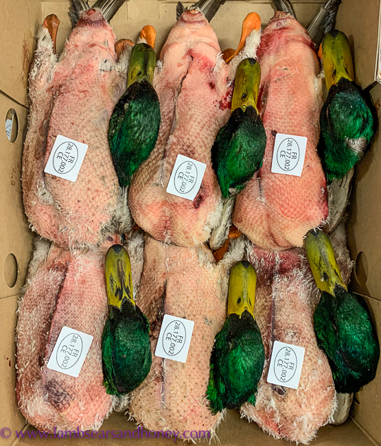 Fresh ducks, visit Rungis
