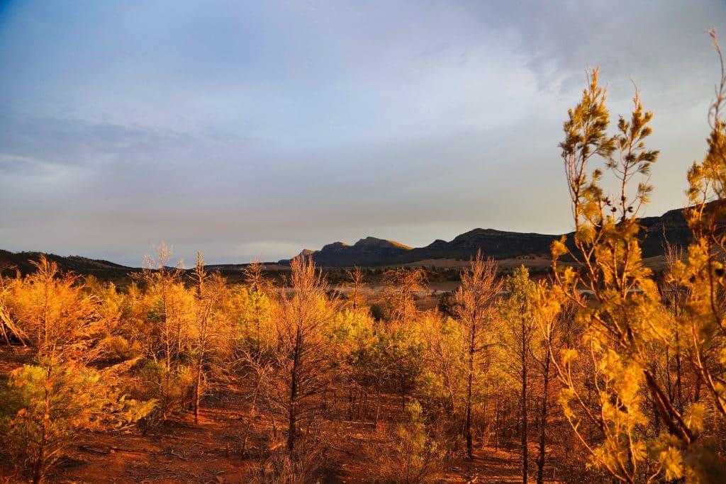 Dawn, Flinders Ranges