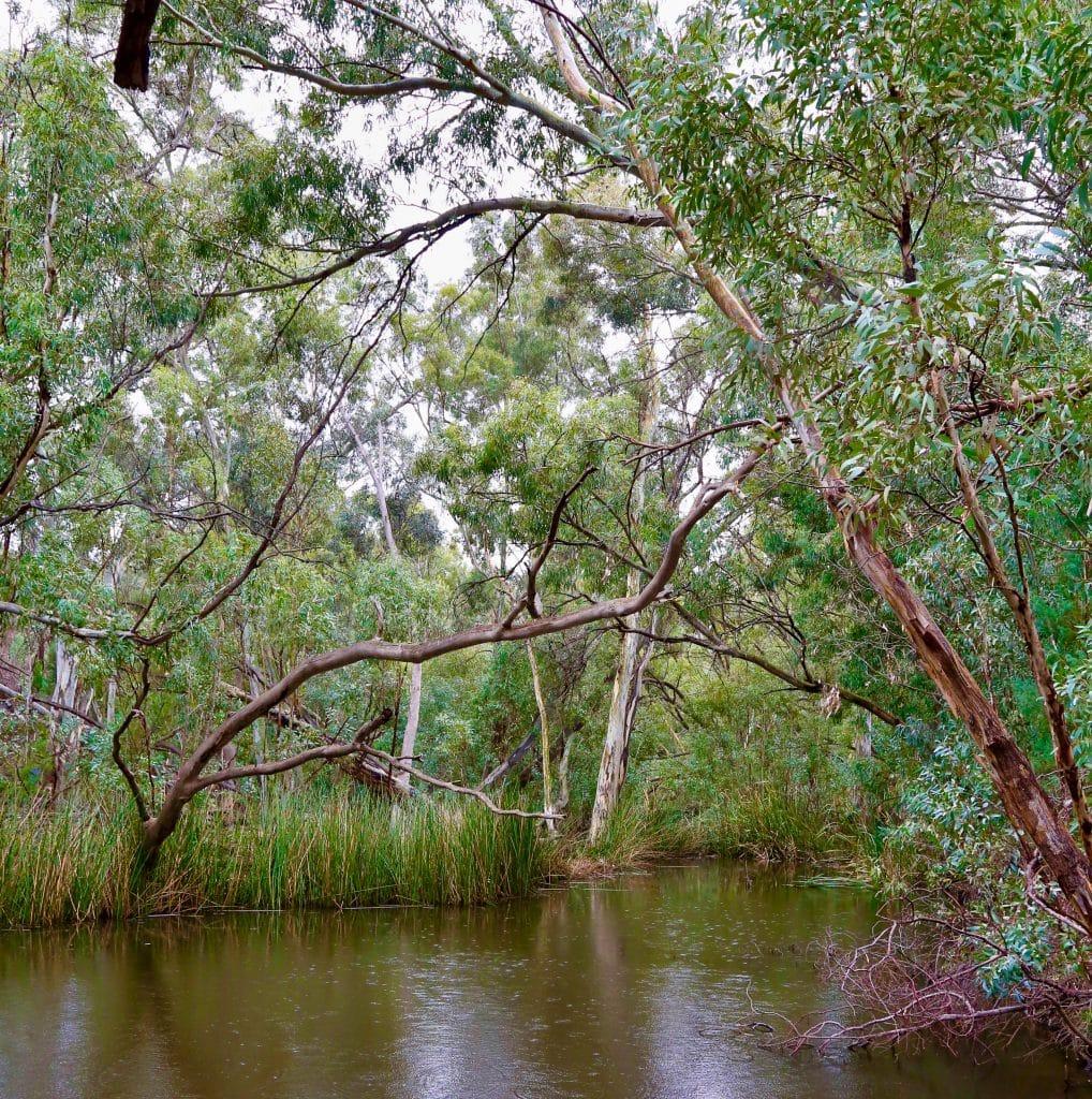 water hole, flinders ranges