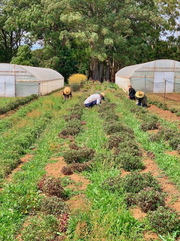 luxury farm stays