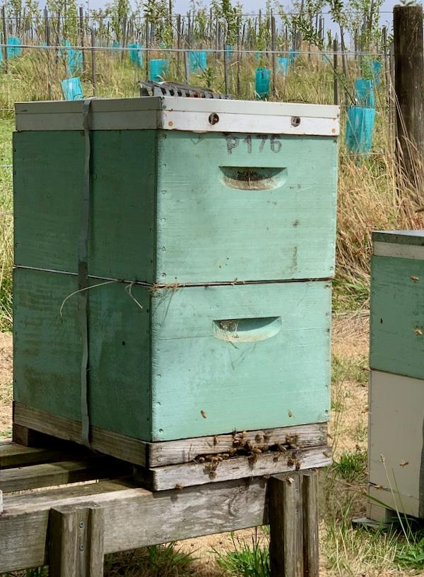bees, luxury farm stays